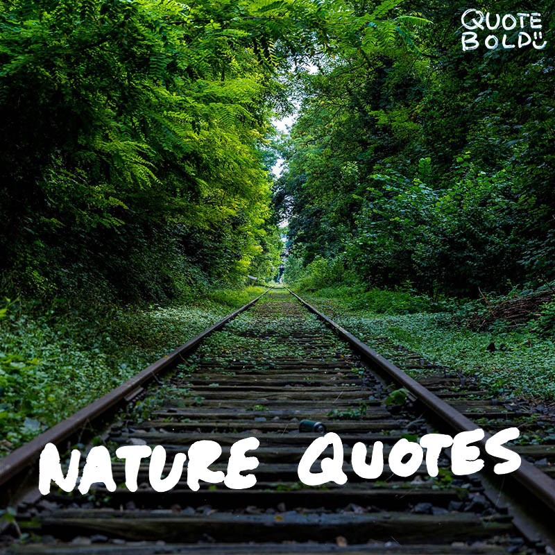 best nature quotes to inspire your day quotebold